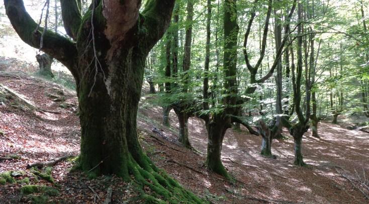 Basqueforest